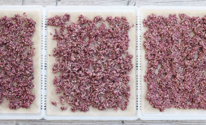 buchweizen-Beeren-Crunchy