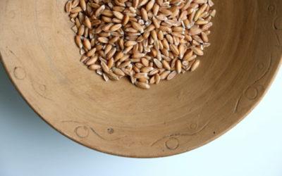 Genaugenommen sind wir alle von einer Getreideunverträglichkeit betroffen