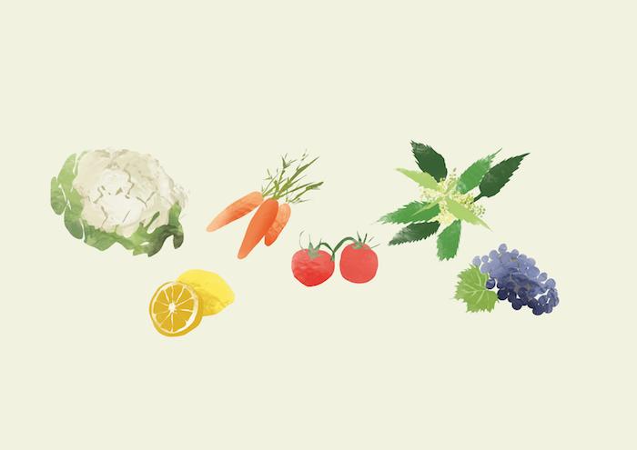 Wie wirken sekundäre Pflanzenstoffe auf unsere Gesundheit?